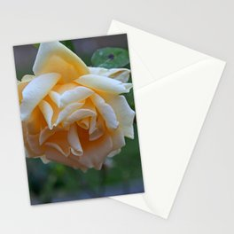 Age is Meaningless Stationery Cards