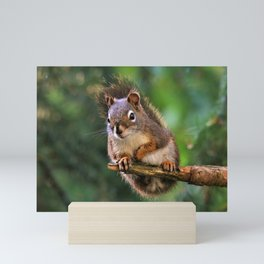 Who, Me? A Saucy Red Squirrel Mini Art Print