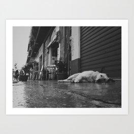 Palermo, Ballarò sleeping dog Art Print