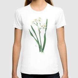 Cluster Daffodils Botanical Illustration T-shirt