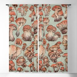 A Series of Mushrooms Blackout Curtain
