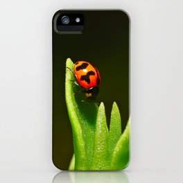 An Orange Ladybird Walking Down A Pointy Succulent iPhone Case