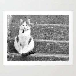 Black and white kitty on the steps Art Print