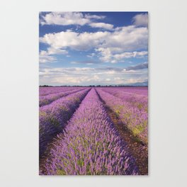 Blooming fields of lavender in the Provence, southern France Canvas Print