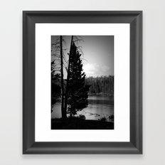 Tree on the Yellowstone Framed Art Print