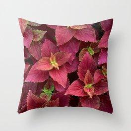Nature Rocks Throw Pillow