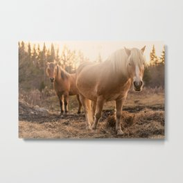 Horses v1 Metal Print