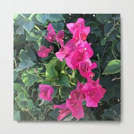 Cascade Of Pink Flowers Surrounded By Lush Leaves Metal Print