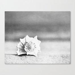 Black and White Beach Photography, Grey Seashell Art, Neutral Shell Photo, Gray Conch Shell Print Canvas Print