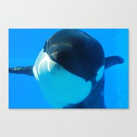 killer whale Canvas Prints featuring Killer Whale by Amber Jade-Rain