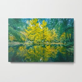 Tranquil settings of a pond and trees in Fall Metal Print