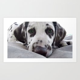 Dalmatian Puppy Face Art Print