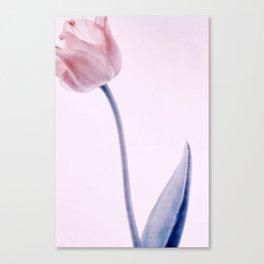tulip series Canvas Print