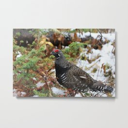 Wood Grouse Metal Print