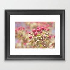 crabapple Framed Art Print