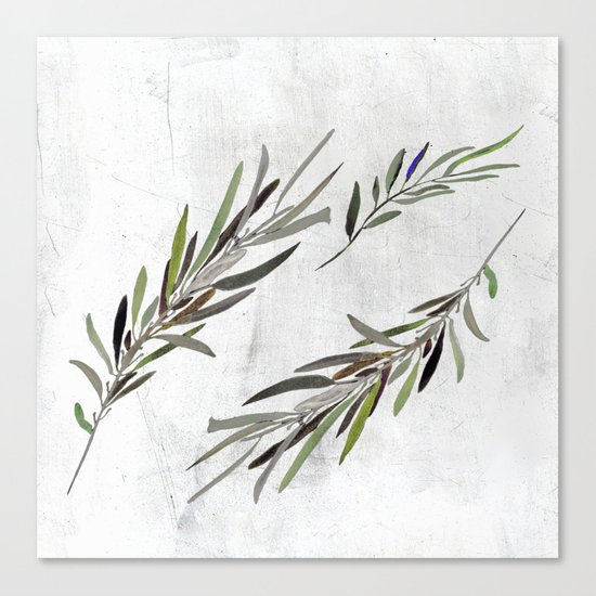 Eucalyptus Leaves White Canvas Print