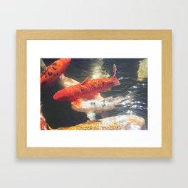 Koi Carp Fine Art Photograph Framed Art Print