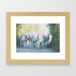 Camargue Horses ... Framed Art Print