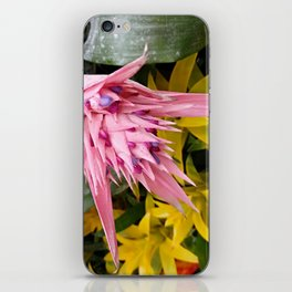 Aechmea pink blossom of the Bromeliaceae family iPhone Skin