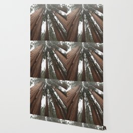 Sky Climbers - Sequoia Wallpaper