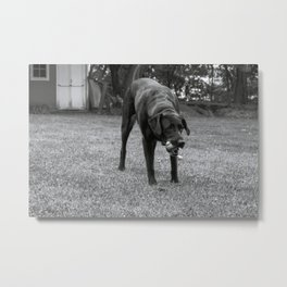 Play Dog Metal Print
