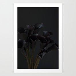 Black Cala Lily on Black Art Print