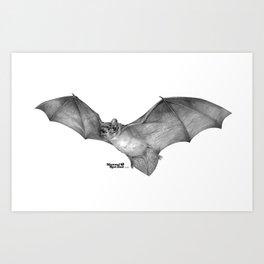 Common Noctule (Nyctalus noctula) Art Print