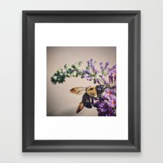 Bee-autiful Framed Art Print