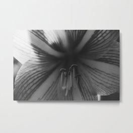 Botanical Gardens Black Orchid #718 Metal Print