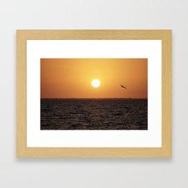 Pelican at Sunset Framed Art Print