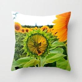 Sunflower Prepares to Unfold Itself Throw Pillow