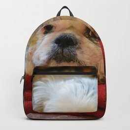 Denali - Loyal Lap-Dog Backpack