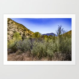 Fresh Green Plants Growing Near Underground Water by the Mountains in the Anza Borrego Desert Art Print