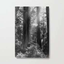 Evening Light Metal Print