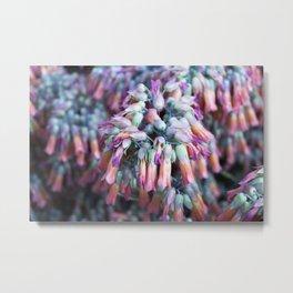 Longwood Gardens Orchid Extravaganza 44 Metal Print
