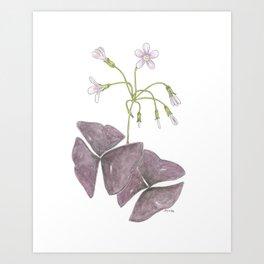 Oxalis Watercolor Art Print