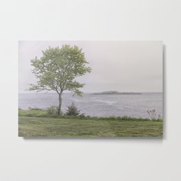 Lone tree by the sea Metal Print