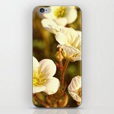 Peaceful iPhone & iPod Skin