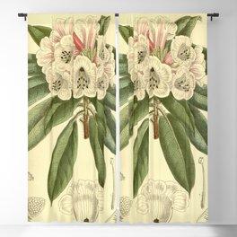 Rhododendron monosematum 1916 Blackout Curtain