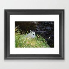 lil goat Framed Art Print