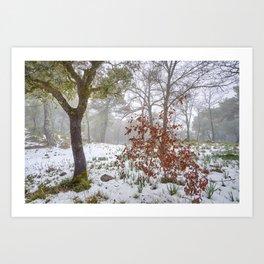 Foggy Oaks. Snowing Into The Woods Art Print