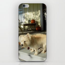 Harvest Pup iPhone Skin