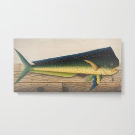Mahi-Mahi Fish artwork Metal Print