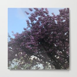 Blossoms Tree Nature Metal Print