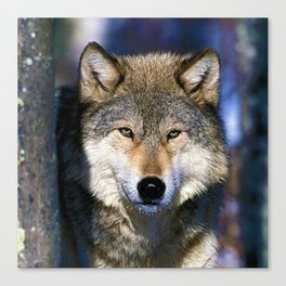 Timber Wolf - Ready to Run - Photography Canvas Print