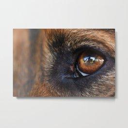 Close-up of a black dog eye Metal Print