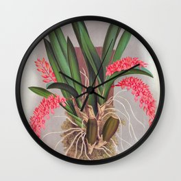 Pink Fern Slipper Orchids Vintage Rodriguezia Bungerothi Wall Clock
