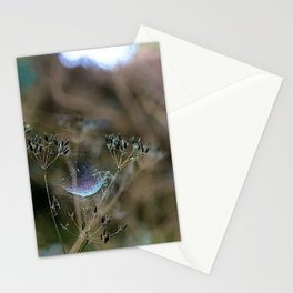 Spiderwebs and Raindrops Stationery Cards
