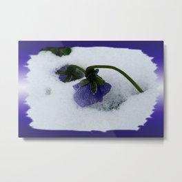 Purple pansy on the snow Metal Print