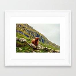 HIGHLAND COW 2 Framed Art Print